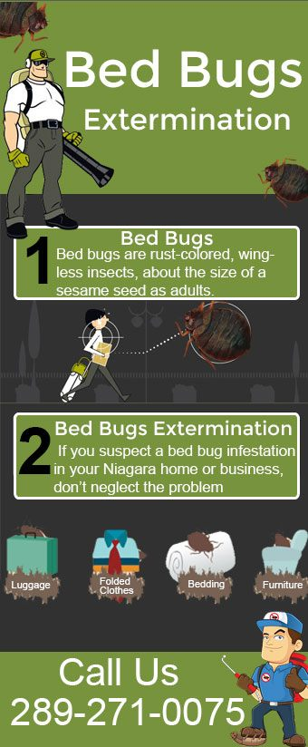 Niagara Bed Bugs Extermination