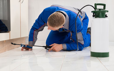 why heat treatment is effective in bed bug removal?