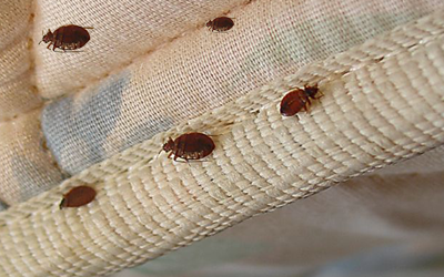 5 Bed Bug Hideouts